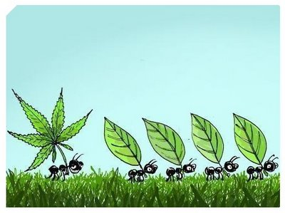 Hoja Marihuana