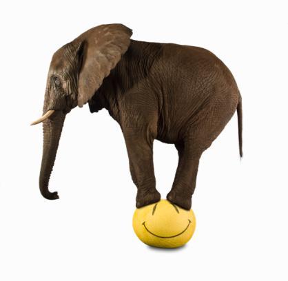 Elefante arriba de la pelota
