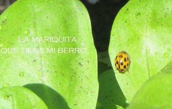 0mariquitaberro