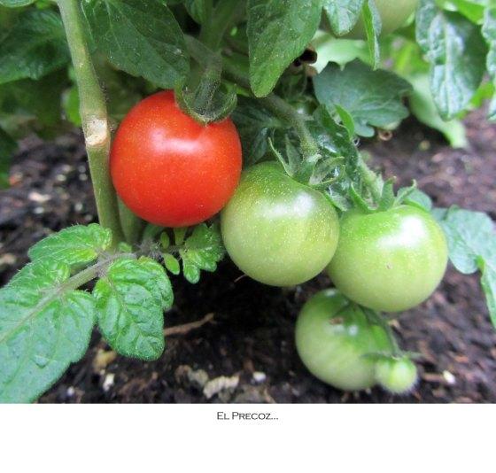 tomatefirst