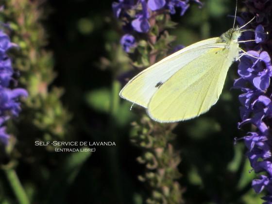 mariposa6
