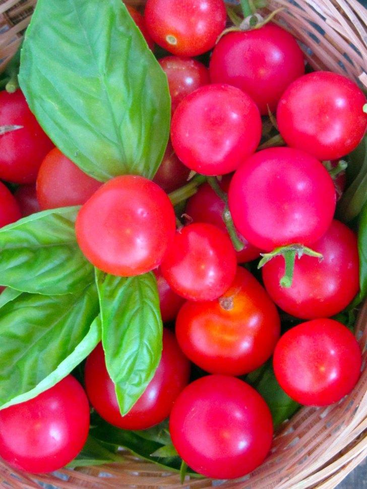 tomaates2
