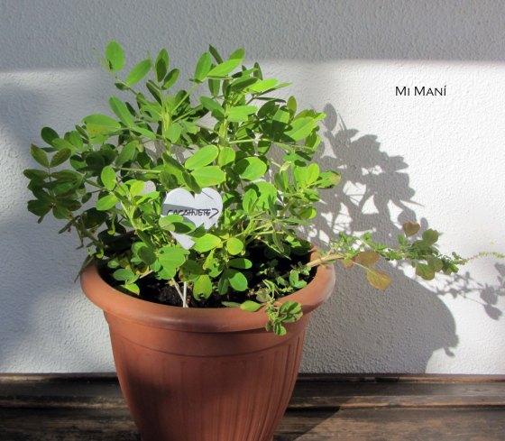 mani1