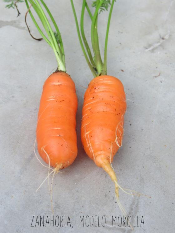 zanahoriamorcilla