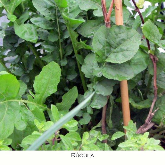 rc3bacula