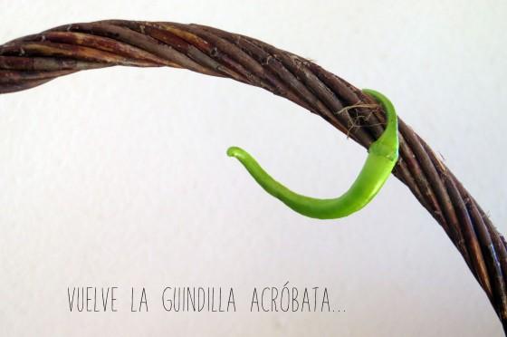 guindillaacrobata