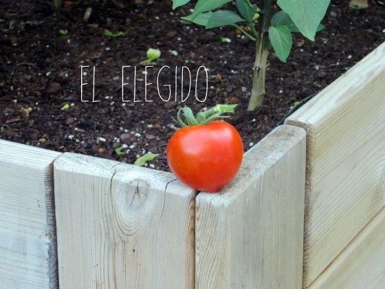 tomate0