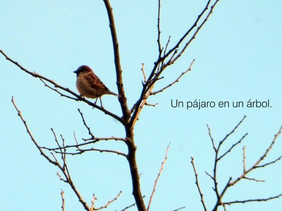 pajaro3