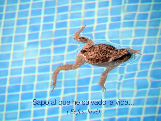 sapo1