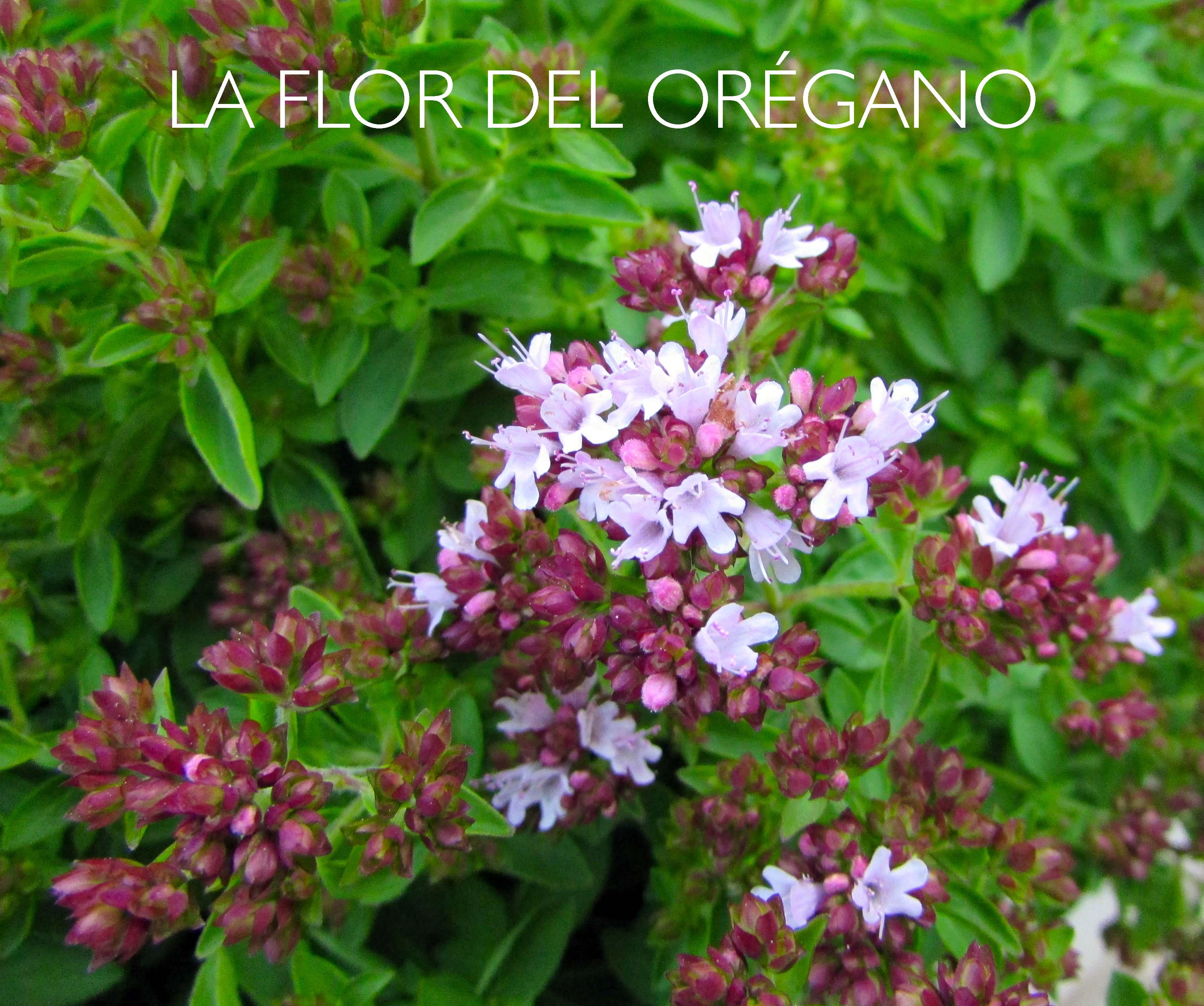 Flores | Non Perfect. El blog imperfecto. | Página 3