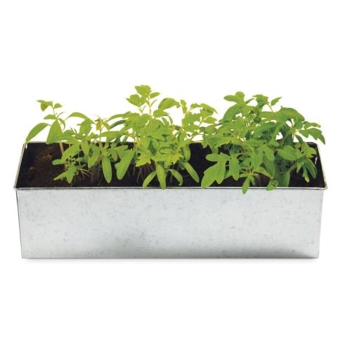 jardinera2